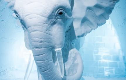 ICE HOTEL Sweden Art Suite 2016, Elephant in the Room design by AnnaSofia Mååg (Sweden)