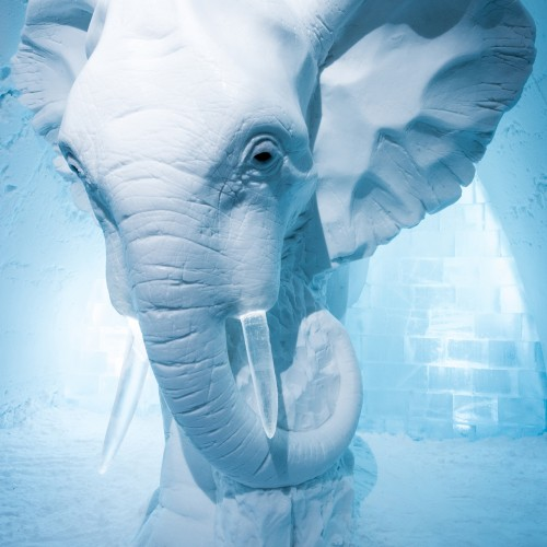 ICE HOTEL Sweden Art Suite 2016, Elephant in the Room design by AnnaSofia Mååg (Sweden)