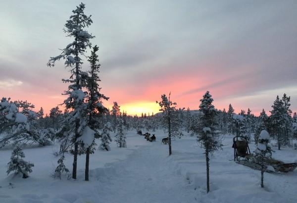 Berry_Sweden_Dec17